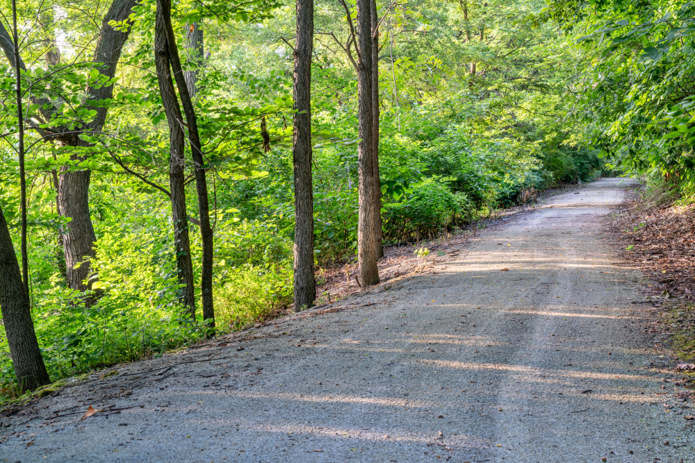 A gravel trail in the middle of the woods. The trail is surrounded by tall grasses and trees with green leaves.