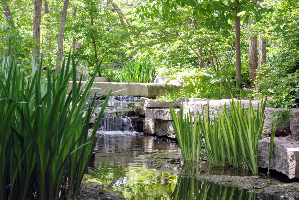 Long green grass and small waterfalls and streams flowing through the grass